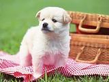 Best Dog Food Ranked