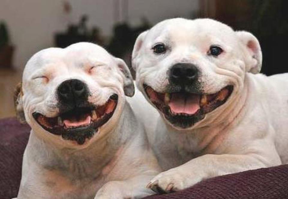 happydogs