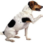 Your Dog's Body Language