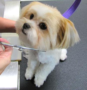 dog grooming3