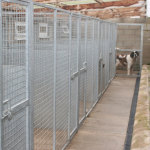 Choosing Suitable Dog Boarding Kennels