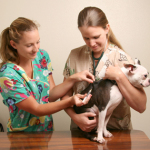 How to Identify Dog Health Problems