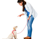 Dog Obedience Training – Stop Barking Dogs