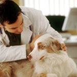 Dog Health Diagnosis