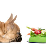 Healthy Dog Information: The Benefits of Organic Dog Food