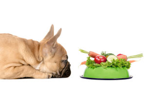 healthy dog food2