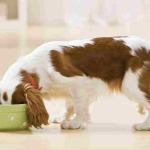 Natural Dog Food – What Is It?
