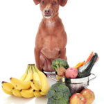 Natural Dog Food: The Best For Your New Pet.