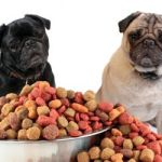 Pet Food: Making The Right Choice For Your Dog