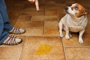 Canine Incontinence