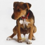How to Treat Puppy Urinary Infections