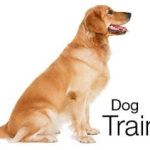 Bring Home the Dog School, Use A Dog Training DVD