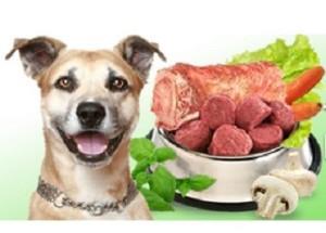 Canine Diabetes