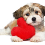 Natural Healing for Congestive Heart Failure in Dogs