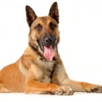 In Home Dog Training – the Truth