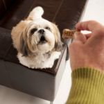 Dog Food – Use Only Organic Sources