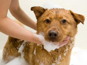 Dog Skin Conditions