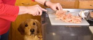 Homemade natural dog food