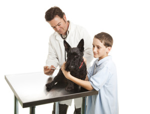 Vaccinations for Older Dogs