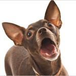 Dog Barks Different Sounds