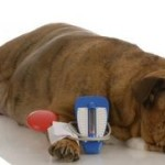 Understanding Heart Failure In Dogs