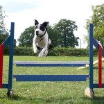 Dog Training Courses