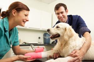 How To Compare Pet Insurance
