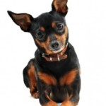 Dog Training Tips – Using Body Language