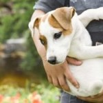 Worms in Dogs And How to Treat Them