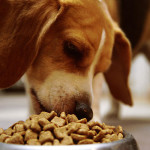 Dog Food Comparisons