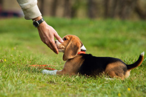 Puppy Obedience Training