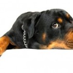 Pet Food For Safety And Health