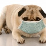 Understanding Dog Health Problems
