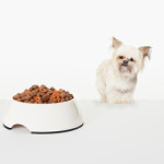 High Protein Dog Food