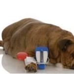 The Truth About Diabetic Dog Food