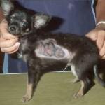 Dog Worm Symptoms