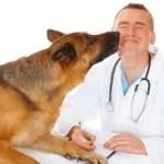 Pet Care Insurance – Selecting the Best Pet Insurance