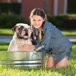 Natural Cure for People with Dog Allergies