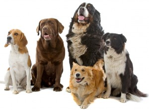 Dog Food and Dog Health
