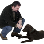 How to Train Your Dog - Can Older Dogs Be Trained?