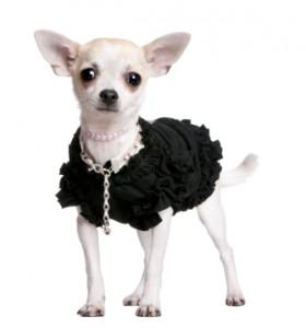 Chihuahua Names