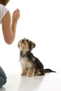 Training Your Small Dog