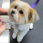 Dog Grooming Tips - Brushing Your Dog's Coat