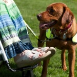 Dog Training of a Different Type - Assistance Dogs