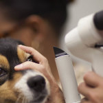 Dog Eye Care