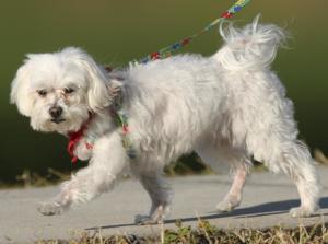 Dog Health News