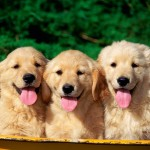 Pet Vitamin Supplement for Your Dog