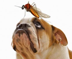 Fighting Fleas