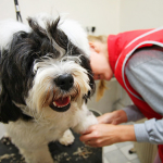 Benefits of Dog Grooming