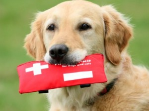 Dog Emergencies